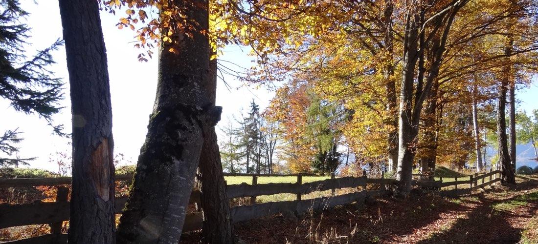 Herbst am Tschöggelberg in Südtirol